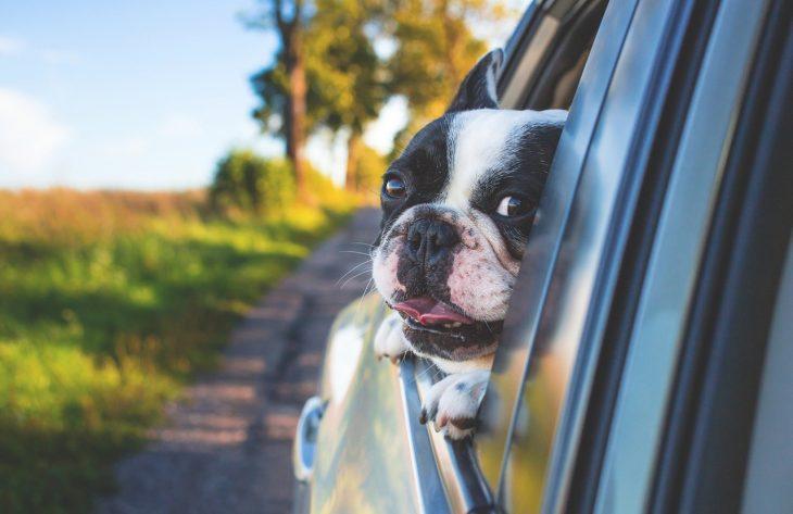 Hunde als Beifahrer