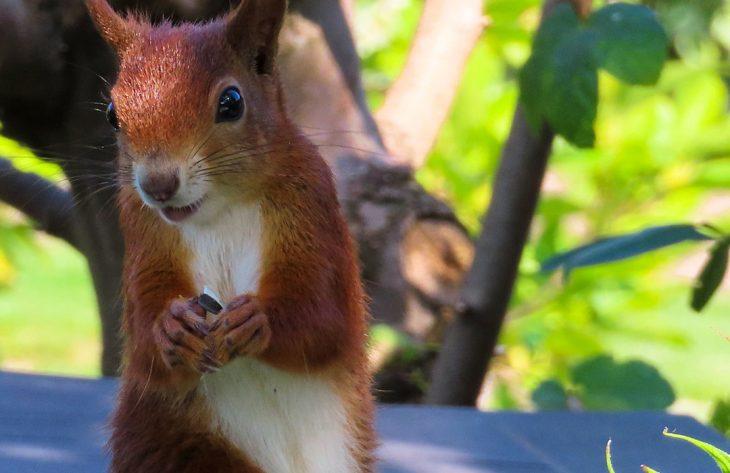 Igel und Eichhörnchen in der kalten Jahreszeit