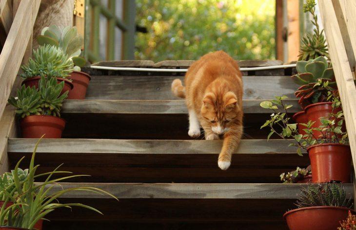 Im Blickpunkt – Katzentoiletten