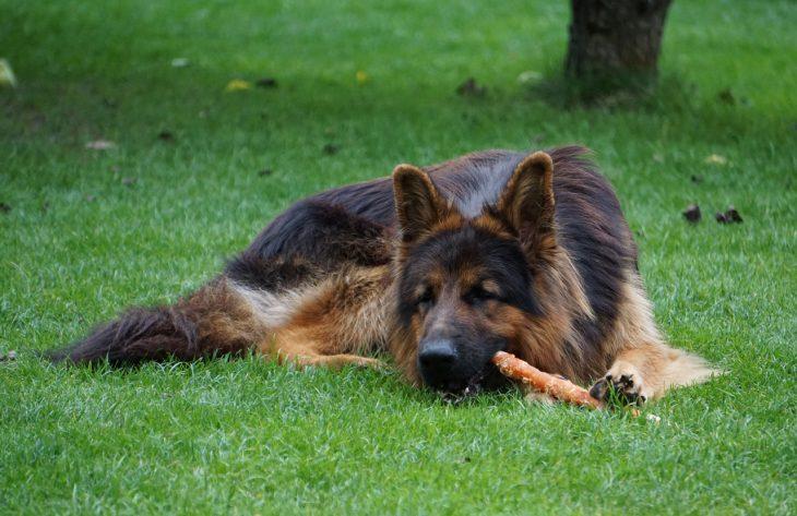 Warum Hundesnacks so beliebt sind