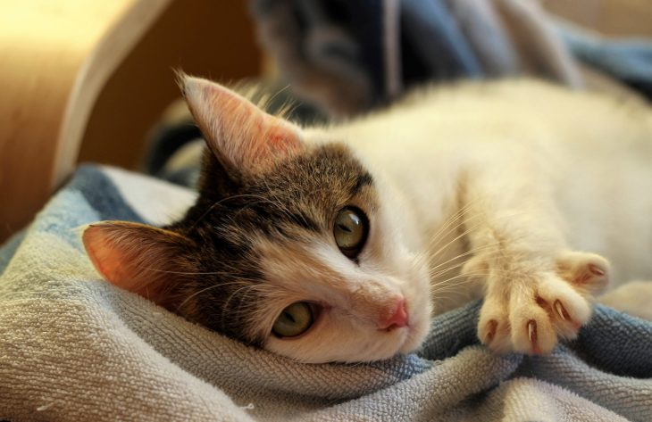 Krallenpflege der Katze