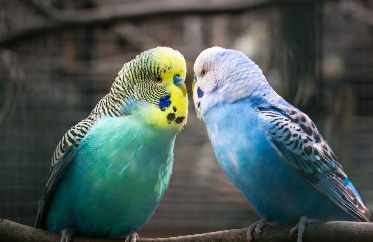 Tipps zur Vergesellschaftung von Vögeln