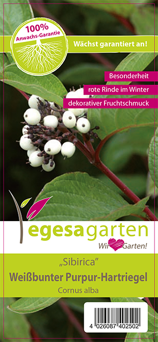 """egesa garten Weißbunter Purpur-Hartriegel """"Sibirica"""""""