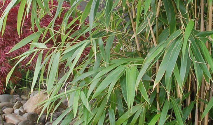 Faszination Bambus