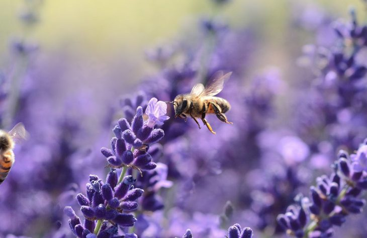 Insektenfreundliche Pflanzen