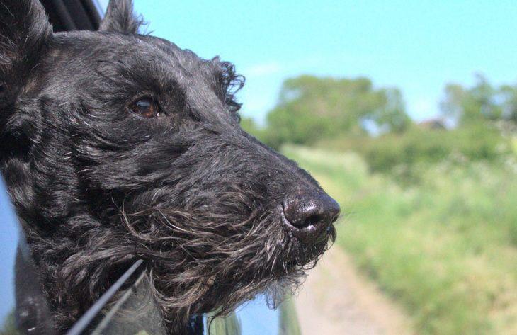 Verreisen mit Hund