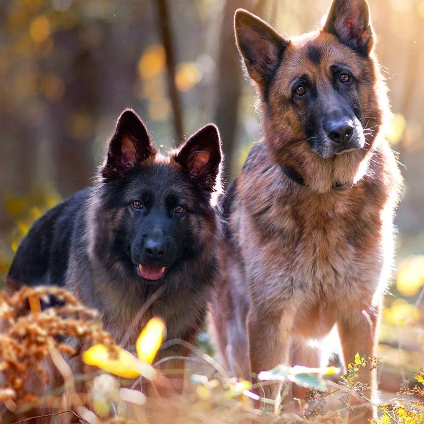 Kani & Yaello