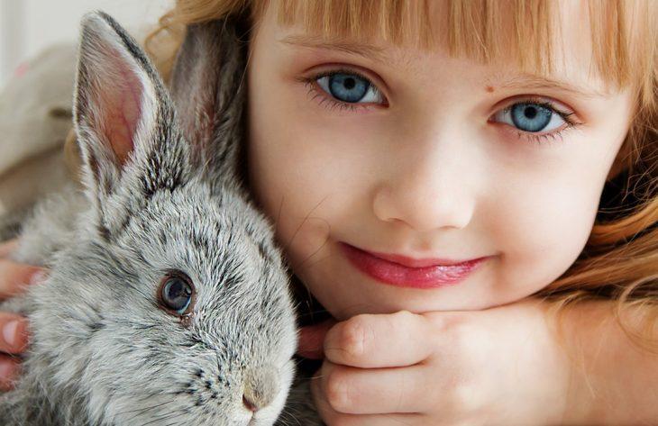Kaninchen Ohren Ratgeber