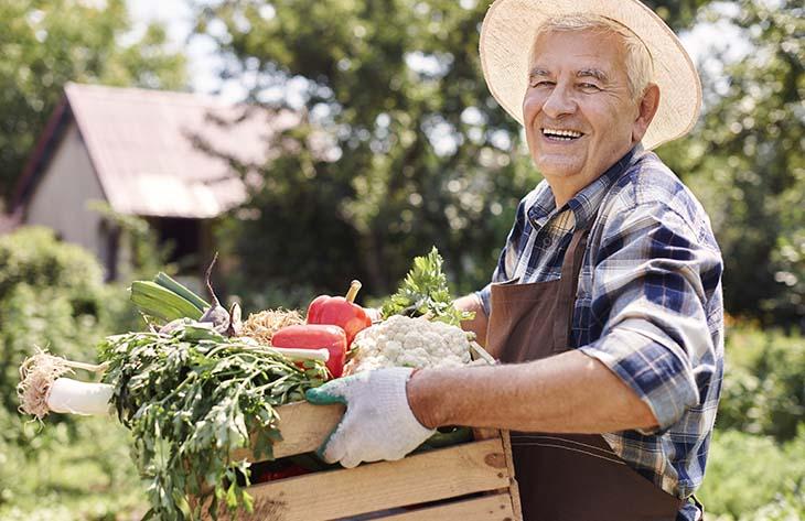 Obst, Gemüse, Kräuter Ratgeber