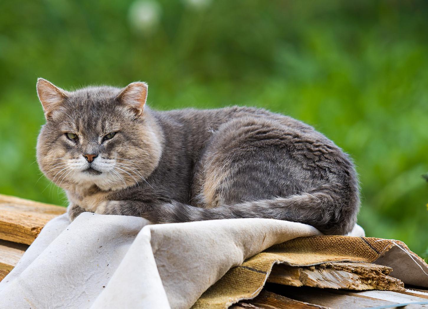 Ernährung von Seniorkatzen